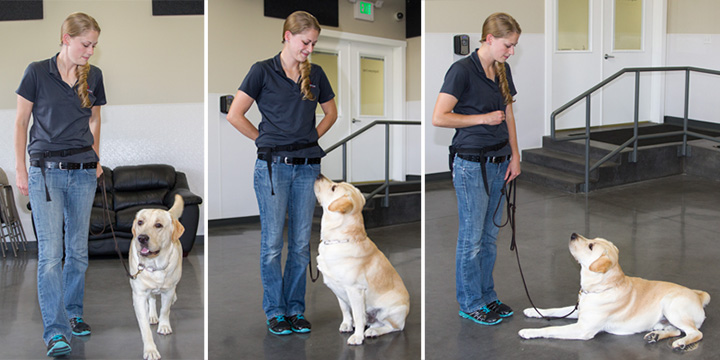 5 Worthwhile Benefits of Obedience Dog Training